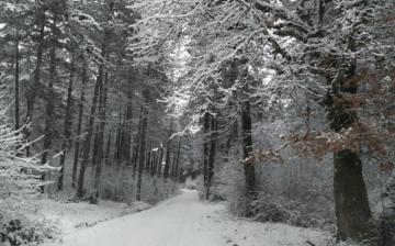 «Cuando cae la nieve, la naturaleza escucha»